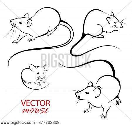 Drawn Mice For Design. Image Of Rats And Mice On A White Background. The Contour Of Rodents.