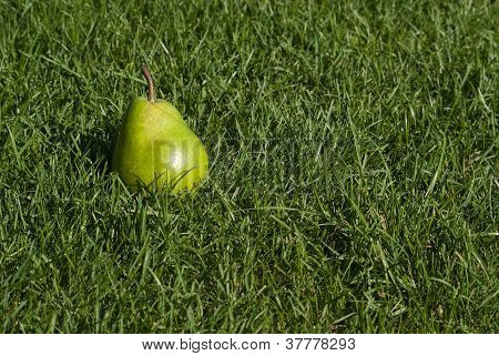 Pear In The Grass