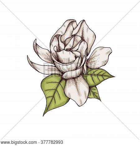 Shabby Chic Gardenia Flower Decor 300 Dpi Digital Art