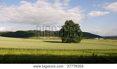 Tree On Field