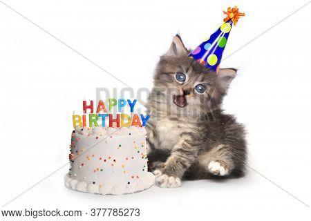 Adorable Kitten on White With Birthday Cake Celebration