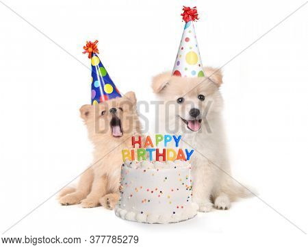 Humorous Puppies Singing Happy Birthday Song With Cake