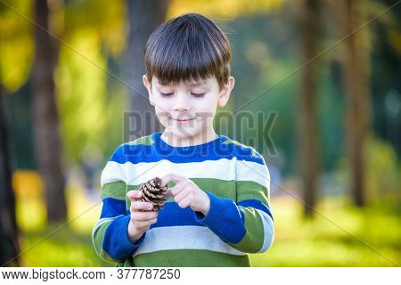 White Toddler Boy Playing In A Pine Forest With Pine Cones. Conifer Cones On The Grass Serve As Toys