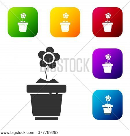 Black Flower In Pot Icon Isolated On White Background. Plant Growing In A Pot. Potted Plant Sign. Se