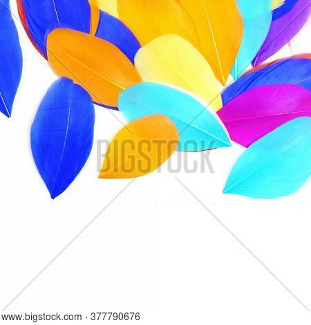 Bright feathers on a white background. Carnival
