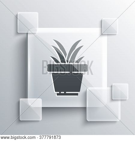 Grey Flower In Pot Icon Isolated On Grey Background. Plant Growing In A Pot. Potted Plant Sign. Squa