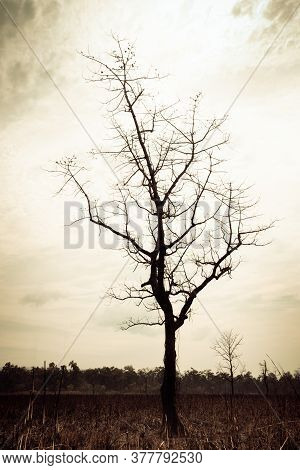 Silhouette Of A Leafless Tree In The Rainforest Jungle Against Bright Sky. Chitwan National Park, Ne