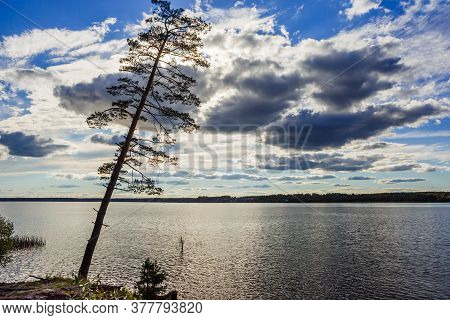 A Crooked Pine Tree On The Background Of The River And Dramatic Cloudy Sky