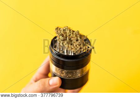 Indica Medical Health. The Pot Leaves On Buds. Cannabis Nature Bud. Marijuana Weed Bud And Grinder.
