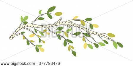 Beautiful Vector Birch Tree Branch With Leaves
