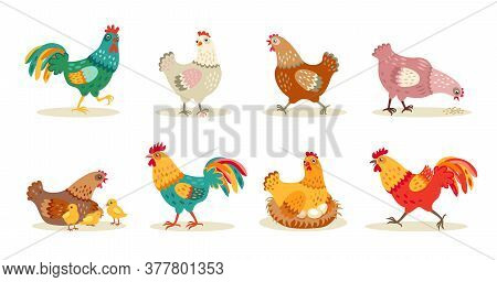 Various Cute Chickens Flat Icon Set. Cartoon Hens And Roosters Walking, Standing, Sitting In Nest Is