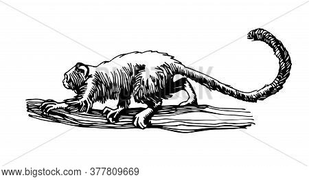 Red Handed Tamarin Monkey Walking On A Branch, Funny Smart Pet With An Emotional Face, Vector Illust