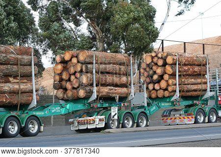 GEELONG, AUSTRALIA - APRIL 7, 2007: Articulated semi truck transport a cargo of just cut logs.