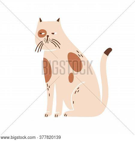 Sleepy, Lonely Cat Portrait. Cute Beige Pet. Kitten Muzzle. Domestic Animal. Decoration, Childish De