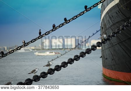 The Seabird Which Stops On The Chain Of The Ship Moored At At The Port