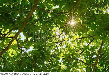Sun Casting Beautiful Rays Of Light Through The Dense Foliage Of The Trees. Sun Rays Deep In The For