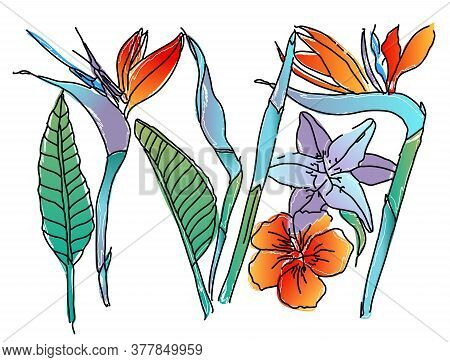 Strelitzia Reginae Orange Tropical Flower Bouquets Vector Set Isolated On White. Tropical Flowers. G