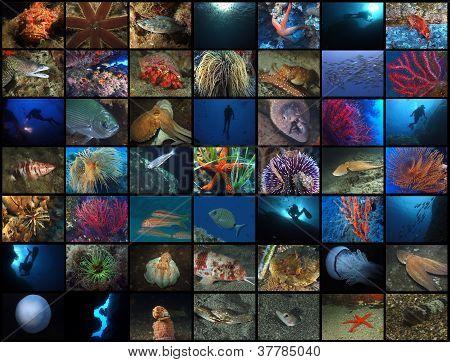 Submerged world