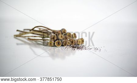 Dry Poppy Boxes, Foreground Texture.dry Poppy Boxes On A White Background.poppy Seeds On A White Tab