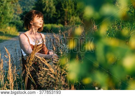 Middle Aged Mature Short Haired Woman In Overalls Picking Wild Daisy Flowers In Field. Elderly Femal