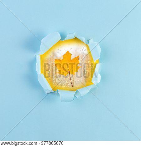 Autumn Maple Leaf Against Background Of Bursting Torn Paper Hole. Autumn Leaves Concept. Yellow Autu