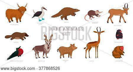 Rare Animals Collection. World Rarest Animals. Flat Style Vector Illustration Isolated On White Back