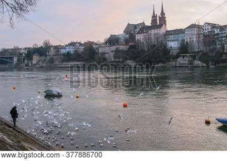 A Man Standing On The Bank Of The Rhine And Feeding Birds, Basler Munster Cathedral In Background, S
