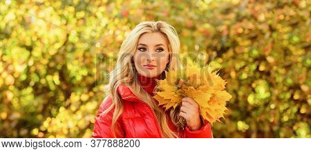 Girl Blonde Makeup Dreamy Face Hold Bunch Fallen Maple Yellow Leaves. Woman Spend Pleasant Time In A