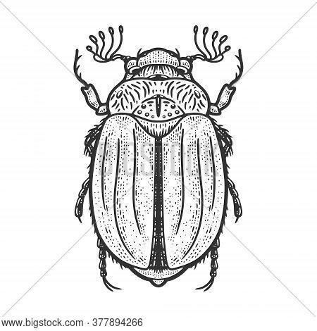 Chafer May Bug Melolontha Sketch Engraving Vector Illustration. T-shirt Apparel Print Design. Scratc
