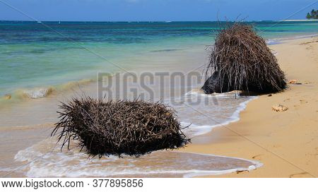 Tropical coast. The roots of the palm trees on the shore. After the storm. Dominican Republic. Atlantic Ocean