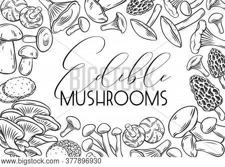 Engraved Mushrooms For Menu, Label Or Packaging. Hand Drawn Edible Mushrooms Boletus, Chanterelles,