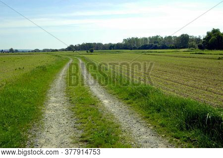 Unpaved Road On The Countryside, Next To Field And Green Meadow