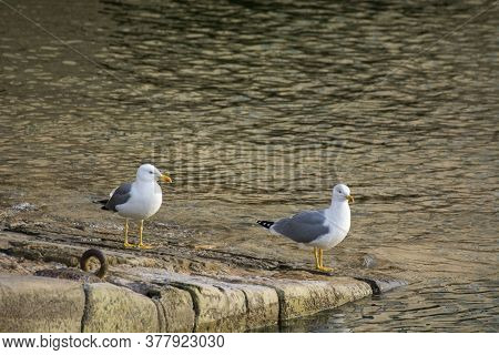 Photo Of Two Birds Of Several Colours With Selective Focus And Sunlight.
