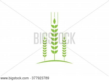 Wheats Ears Icons And Wheat Logo Design Elements For Beer, Organic Fresh Food Corn Farm, Bakery Them