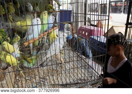 Salvador, Bahia / Brazil - April 25, 2013: Child Is Seen Beside A Cage Of Parakeets In A Pet Store I