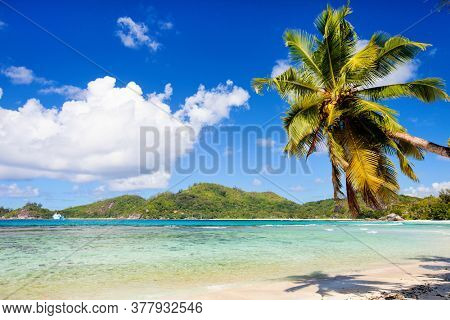Perfect tropical beach with palm tree hanging over white sand and turquoise waters