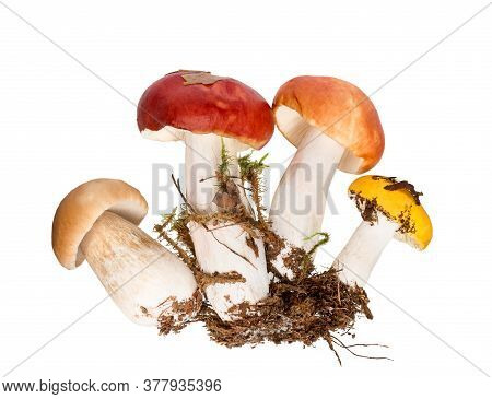 Mushrooms Isolated On White Background. Variety Of Raw Mushrooms Cut Out.  Wild Forest Mushroom. Aut