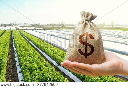 A Hand Holds Out A Dollar Money Bag On A Background Of Potato Plantation Farm Fields. Lending Farmer