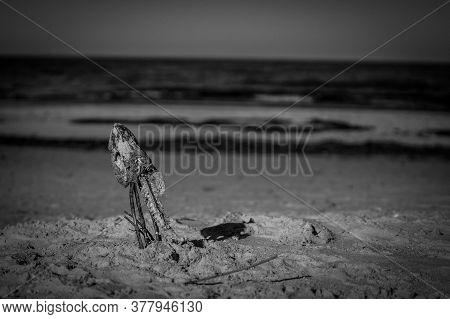 Ostsee Lake Toter Fisch Sommer Beach Nah Tele