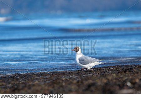 Ostsee Lake Bird Moeve Sommer Beach Nah Tele