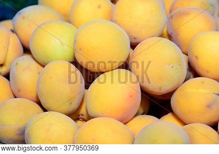 The Harvested Harvest Of Ripe Apricots Is Shot Close-up.