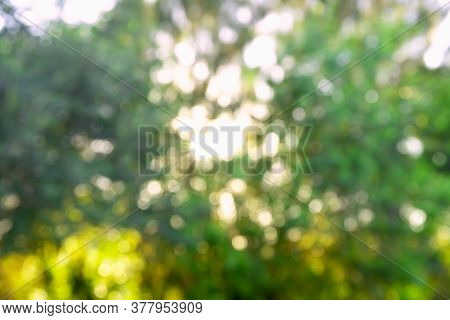 A Bokeh Image. An Out Of Focus Background Landscape Image Depicting A Short Bushy Tree In A Meadow B