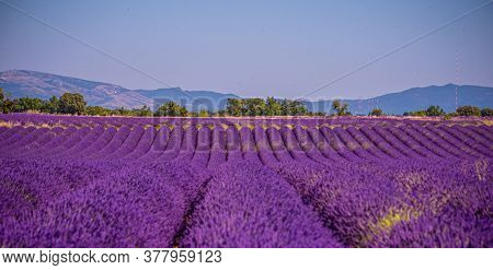 Landscape Of The Plains Of Valensole In The Provence