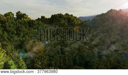 Sunrise In The Rainforest, Concept For Forest Protection, Saves The Rainforest, Co2 Minimization, Gl
