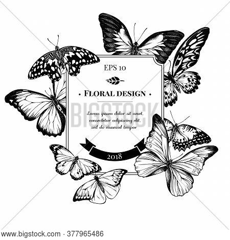 Badge Design With Black And White Blue Emperor, Menelaus Blue Morpho, Blue Morpho, Red Lacewing, Afr