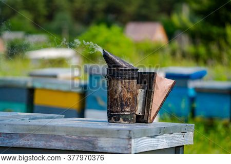 Closeup Of Bee Smoker On Hive. Hives In An Apiary With Bees Flying To The Landing Boards. Apiculture