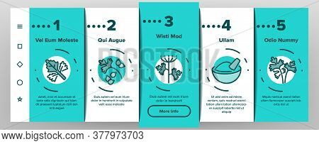 Coriander Herbal Plant Onboarding Mobile App Page Screen Vector. Coriander Leaf And Seeds, In Bag An