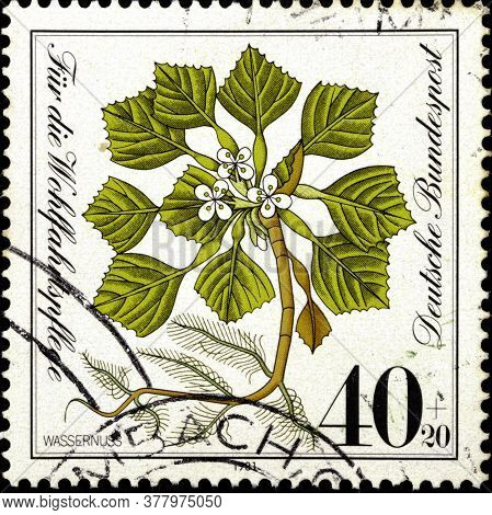 02 09 2020 Divnoe Stavropol Territory Russia The Postage Stamp Germany 1981 Endangered Wild Flowers