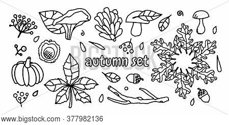 Vector Set Of Doodle Illustrations Of Autumn Leaves, Mushrooms. Line Drawings On A White Isolated Ba
