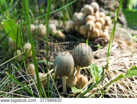 Inedible Mushroom Grows In The Forest. Nature